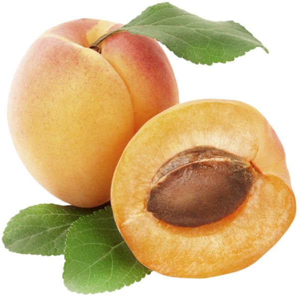 Apricot PNG Clipart Picture