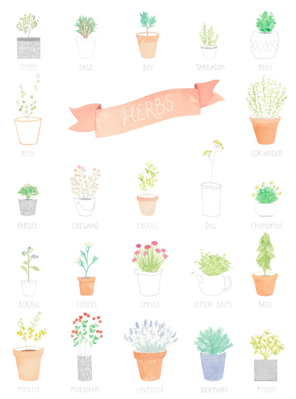 herbs in watercolor: Cake, Amyborrel, Art Prints, Amy Borrel, Herbs Gardens, Herbs Illustration, Posters, Kitchens Prints, Kitchens Herbs