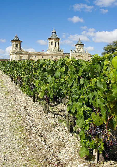 st estephe bordeaux | Vineyards of St Estephe, Aquitaine, France