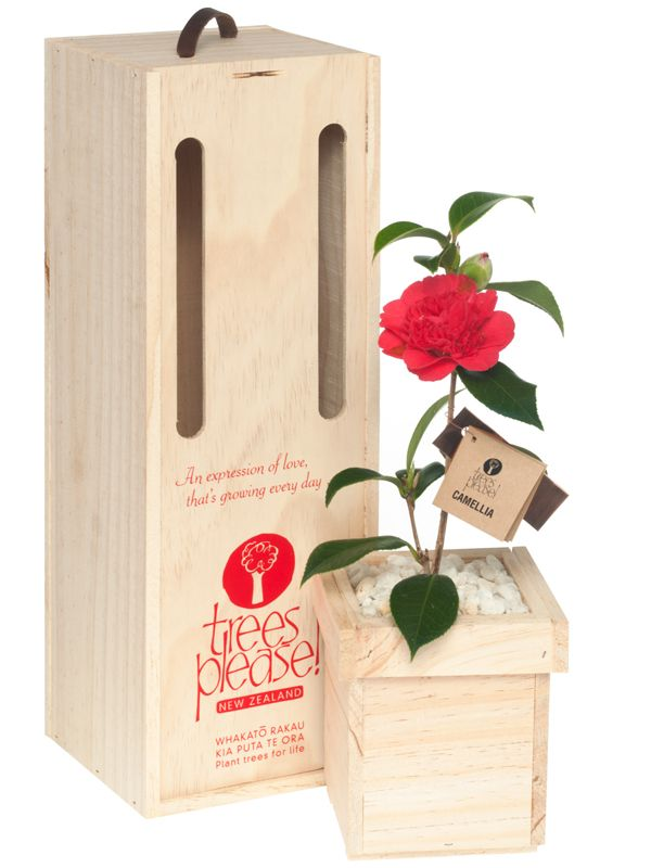 An Expression of love, that's growing every day...... Online gifts delivered within NZ