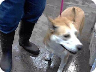Eye Care For Dogs Scottsdale Az