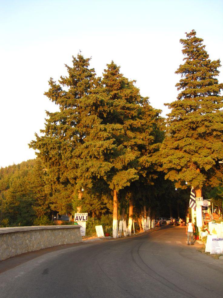 Trees - Kos - Greece