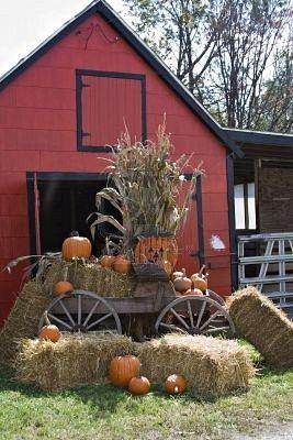 A Fall scene; red barn; wooden wagon; straw, hay pumpkins; halloween; thanksgiving; corn; stalks
