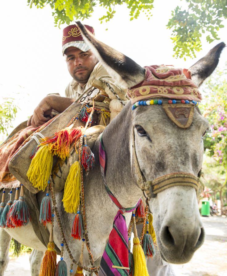 Vrolijk aangeklede ezels lopen door heel Bitez.