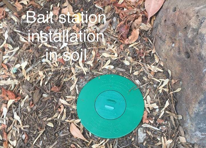 How Do Termite Bait Stations Work Should You Install Termite Bait Stations To Protect Your Home How Do Termite Bait S Termite Bait Termite Control Termites
