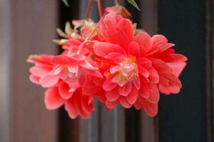 #flower,#nature,#redflower,#outdoor,#macro