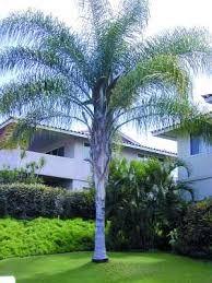 Resultado de imagen para tipos de palmas