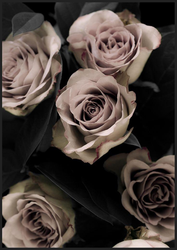 Classic Roses 1, från Insplendor tryckta med Giclée fine Art Print-teknik