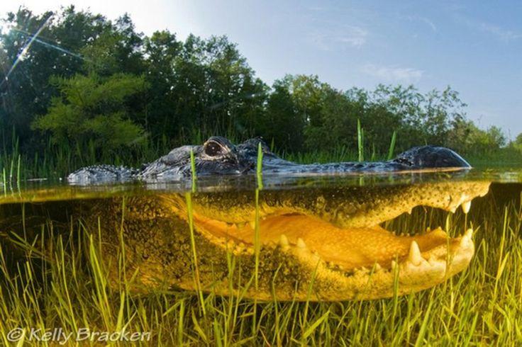 The Everglades in Florida