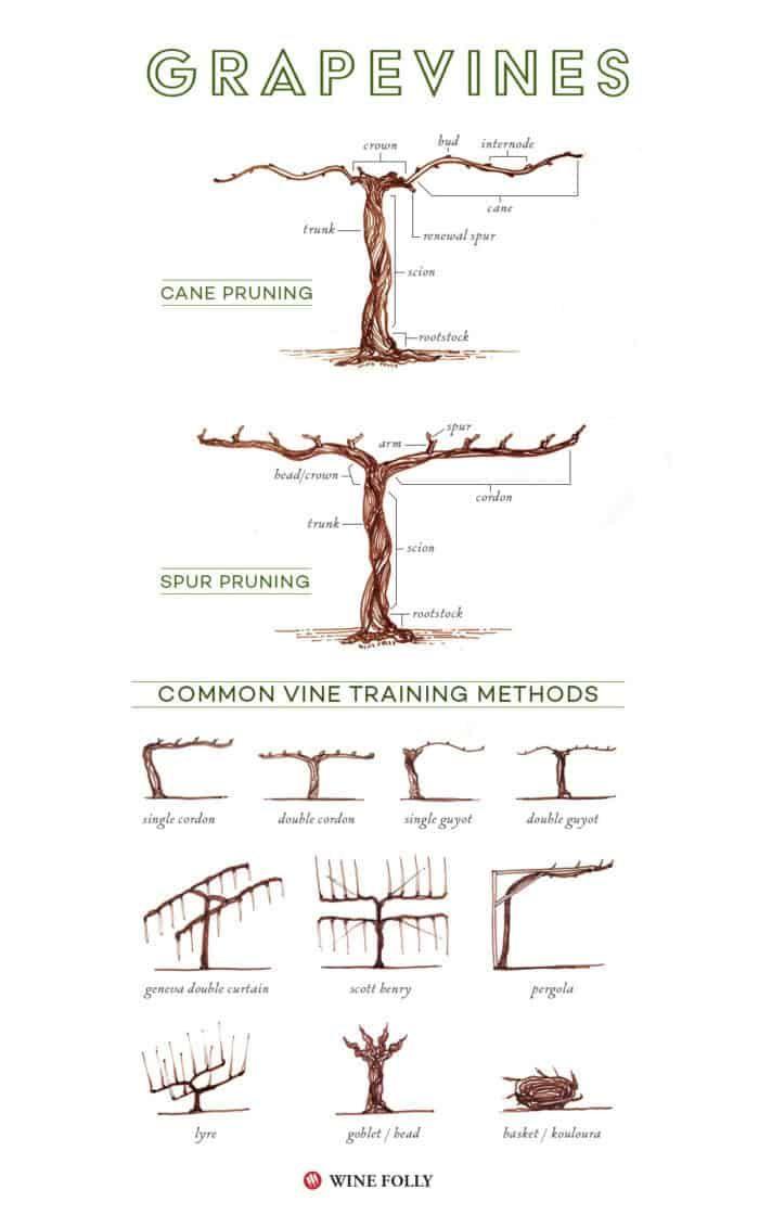Diy Grape Vine Trellis How To Build A Homemade Arbor In The