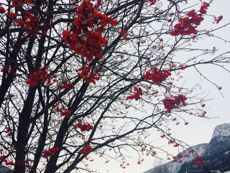 November berries