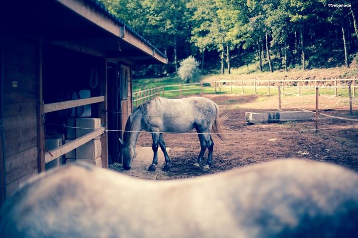 Les chevaux Château Fontainebleau du Var. The horses of the Fontainebleau Castle in Provence #cheval #horse #vineyard #vignoble ©Sebanado  http://sebanado.fr