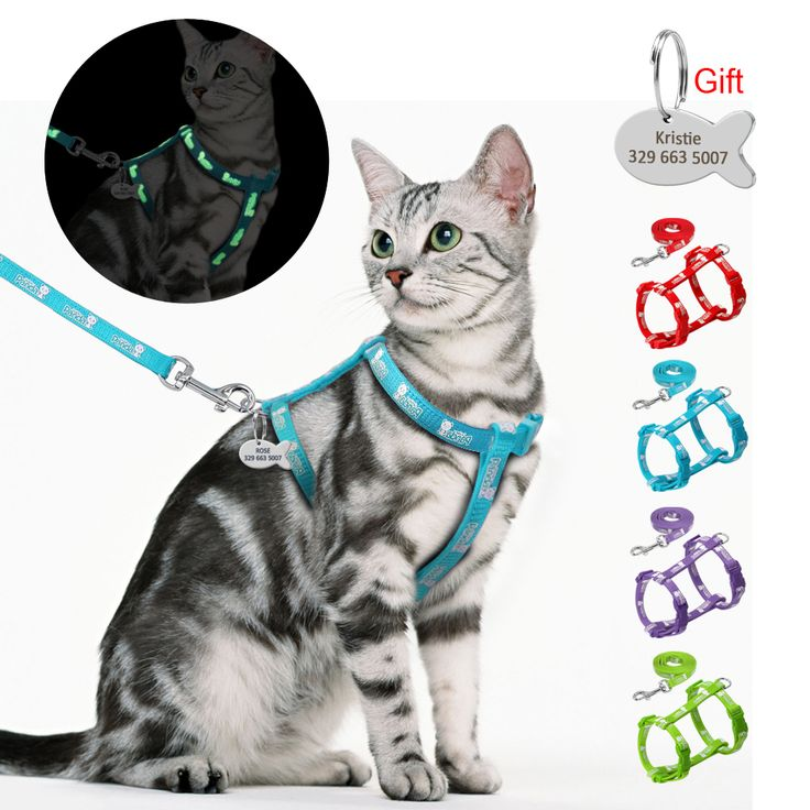 Harness and Leash Set With Customized Id Tag Cats kitten Harnesses Anti Lost Name Tag Free Engraving Blue Red | Aliexpress