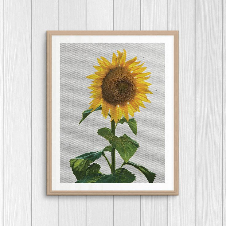 Sunflower Print - Nature Poster - Botanical Art - Nursery Print - Flower Home Decor - Yellow Wall Art - Printable Gift - Digital Home Decor by Thestrangerboutique on Etsy