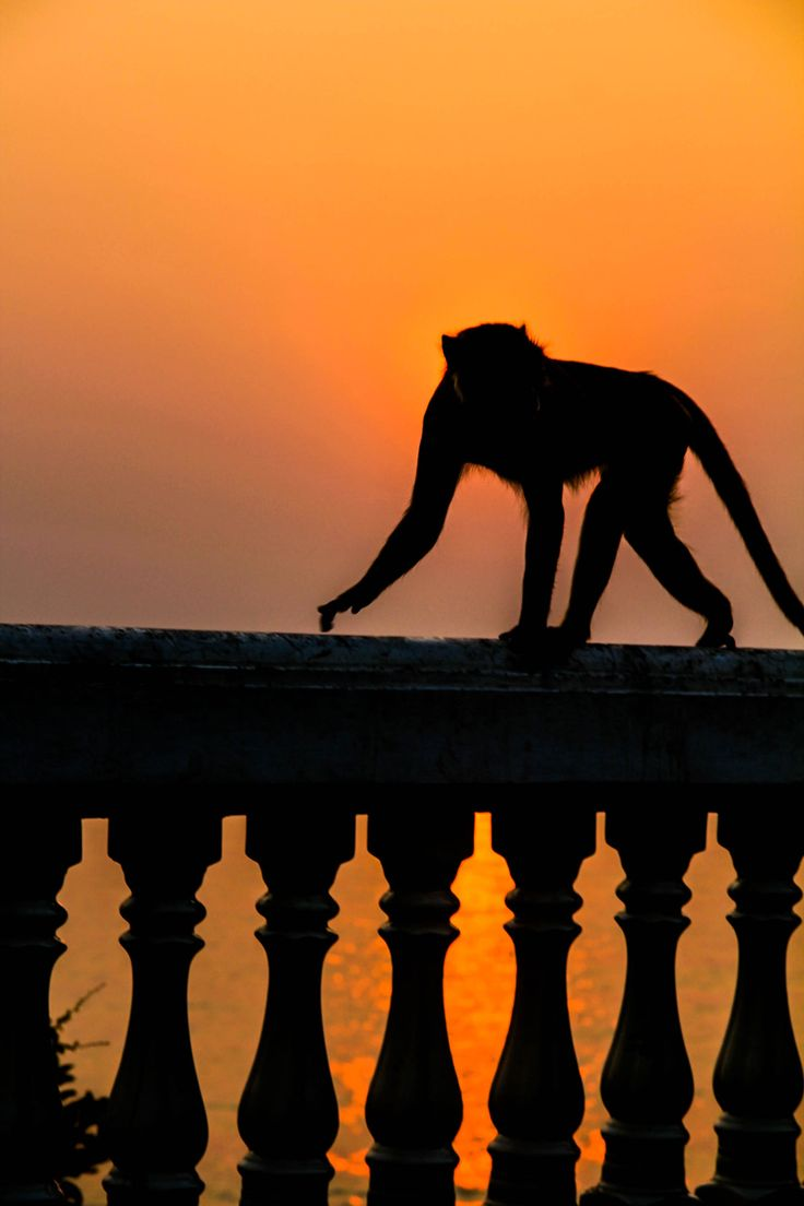 Thailand - Hua hin - monkey business #Thailand #landofsmile #sunrise #monkey #epicgust #summer #asia #travel