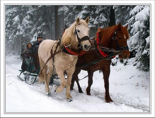 Im Winterwald im Thüringer Wald