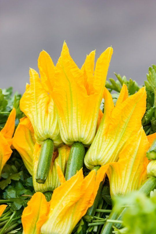 What You Need to Know About Squash Blossoms, the Flower We Love to Fry