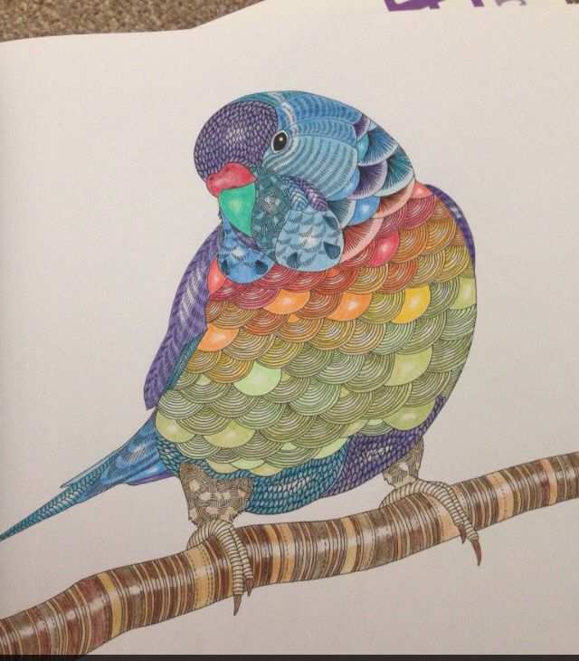 Parrot Millie Marotta Colouring SheetsColoring BooksColouring TechniquesTropical BirdsColored
