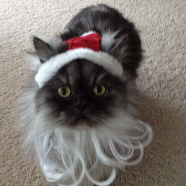 77 best Pets in Costumes images on Pinterest | Animals, Costumes ...