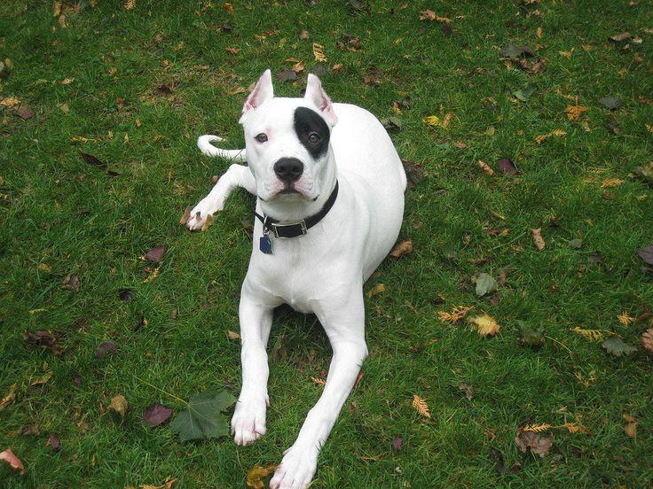 10 razas de perros peligrosos que nos pueden dar un buen susto si nos los encontramos en la calle - https://dominiomundial.com/razas-perros-peligrosos/?utm_source=PN&utm_medium=Pinterest+dominiomundial&utm_campaign=SNAP%2B10+razas+de+perros+peligrosos+que+nos+pueden+dar+un+buen+susto+si+nos+los+encontramos+en+la+calle