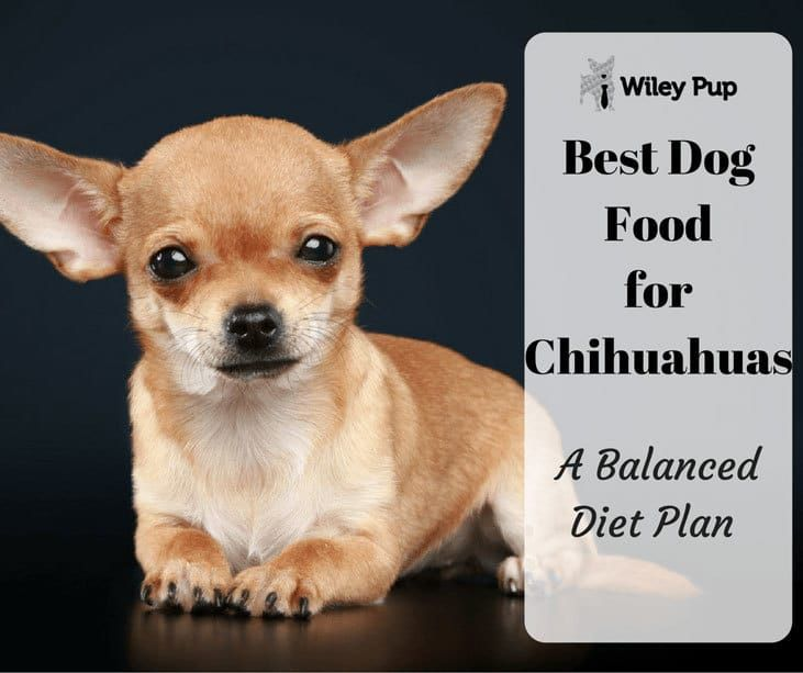 Best Dog Food For Chihuahuas A Balanced Diet Plan In 2020 Best