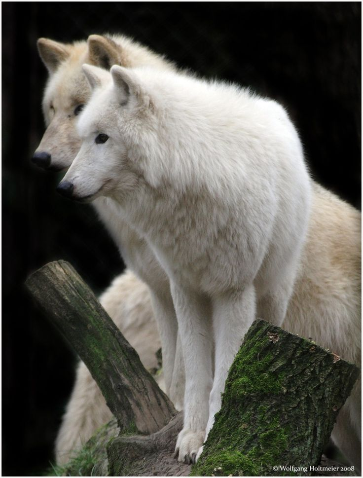 http://animalpicture.ru/wp-content/uploads/2010/09/26-911x1200.jpg