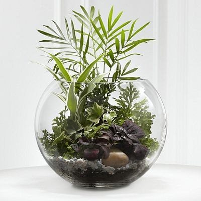 small plants in glass bowl