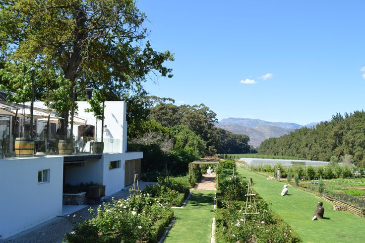 The Werf Organic Food Garden on Boschendal Wine Estate - located in the middle of the 3 most well-known Cape Winelands towns, Stellenbosch, Paarl & Franschoek - Western Cape - South Africa #Boschendal #wineestate #organic #organicgarden #TheWerf #Paarl #Stellenbosch #Franschoek