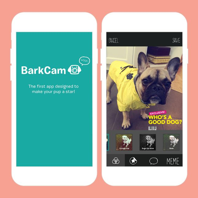 10 Dog Apps That Are Barking Genius | Brit + Co