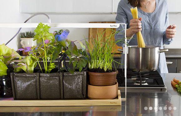 04-bulbo-coltivazione-indoor-ferretticasa
