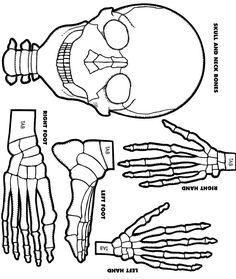 Human Skeleton Paper Model - fun Halloween activity for Anatomy!