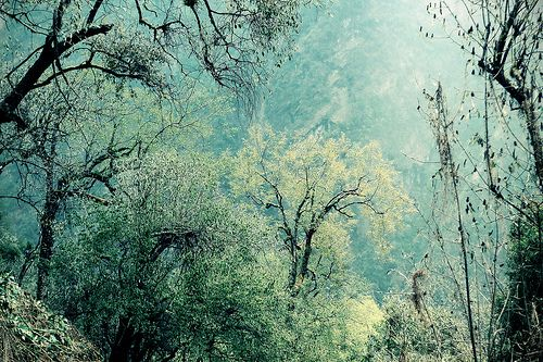 ForestFrozen Trees, Stunning Beautiful, Blue Green, Artsy Nature, Places, Forests Dreams, Beautiful Things, Fairies Tales, Dreams Trees