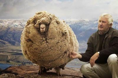 45-photos-terribles-un-peu-plus-que-de-simples-cliches-41-mouton