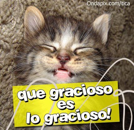 Imagenes Graciosas, Divertidas, Chistosas, Bonitas, con Frases, etc...: Imagenes de Animales Graciosos