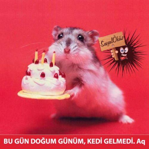 Doğum günü olanlara gelsin, iyiki doğdunuz… #sosyalöküz#fare#güzel#kutlama#resim#doğumgününkutluolsun#doğum#pasta#doğumgünü#kedi#doğumgünüpastası#doğumgünüpartisi#komik#tebrik#kediler#cuma#mesaj
