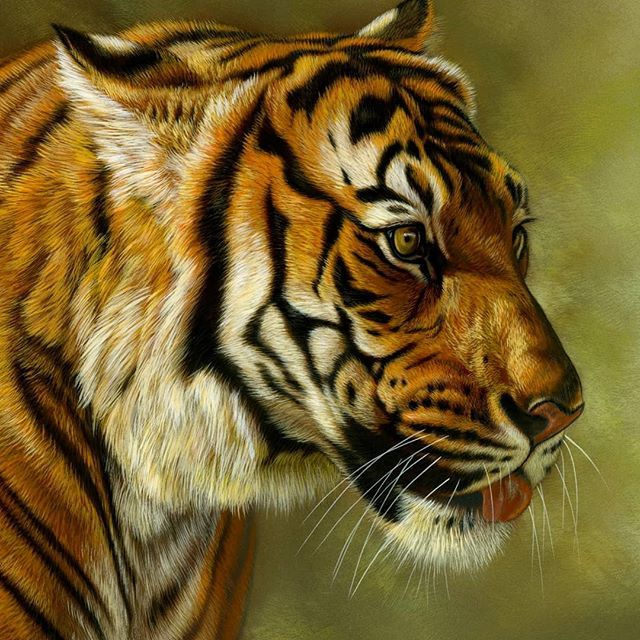Detail Of A Recent Tiger Painting Now Available Through Lovettsgallery In Tulsa Ok Watercolor On Board Rebecca Lat Tiger Painting Tiger Art Wildlife Artwork