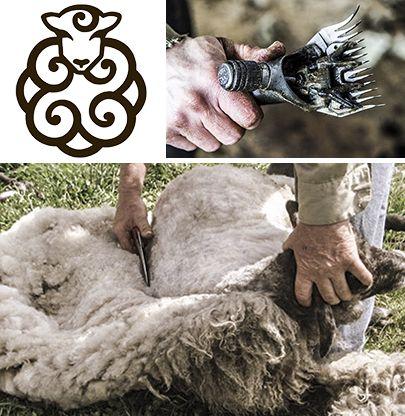 Råuld - Ulden hos spelsau er altid tydelig delt i en blød underuld og lange glansfulde dækhår. Alle farver forekommer, også hos brogede dyr. Ofte har underuld og dækhår forskellig farve. Ulden filter let og en flot helårs uld kræver klipning på det rette tidspunkt. Ulden er meget værdsat blandt uldhåndværkere. Råuld sælges kun direkte efter klipning dvs. lige før og efter sommergræsning. Farver: hvid, mørk og lys grå, mørk og lys brun, sort. Pris for en fåreham råuld 300,- kr.