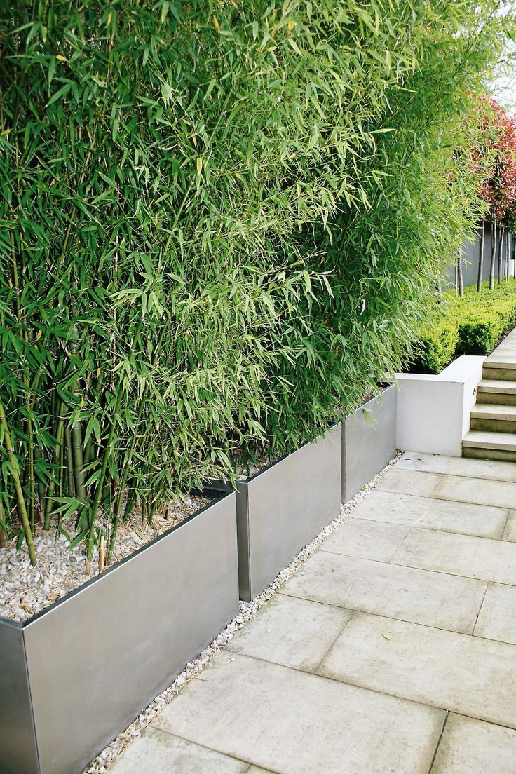 Love love love this... Bamboo screening contained within planters ....... no running loose !