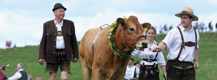 Germany has just lost its longest word -- referring to a law on monitoring mad cow disease.  - Tongue-Twister: Germany Seeks a New Longest Word Rindfleischetikettierungsüberwachungsaufgabenübertragungsgesetz.