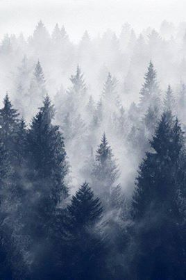 darkness, forest, mist, mystery