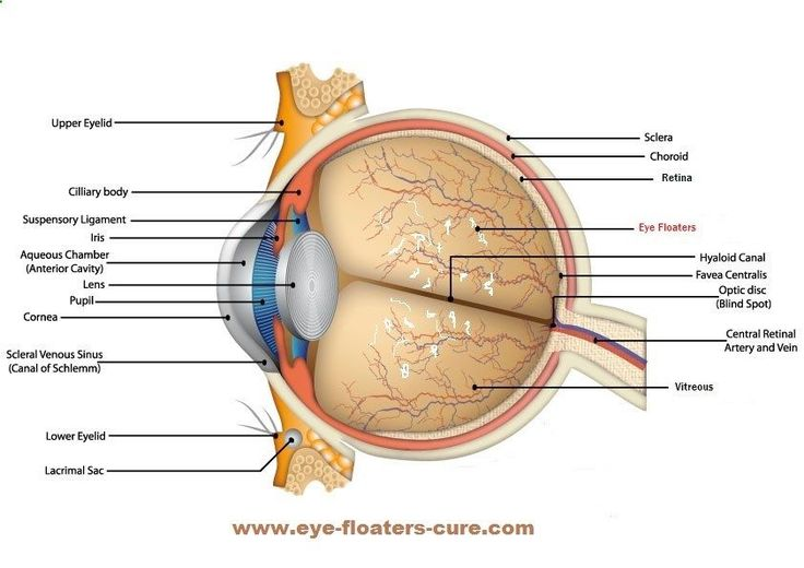 Factors That Contribute To Eye Floaters #eye_floaters_causes #what_causes_eye_floaters #what_causes_floaters