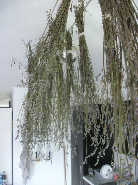 lavendel in der kche trocknen fr seife badesalz und gegen motten - Motten Im Kuchenschrank