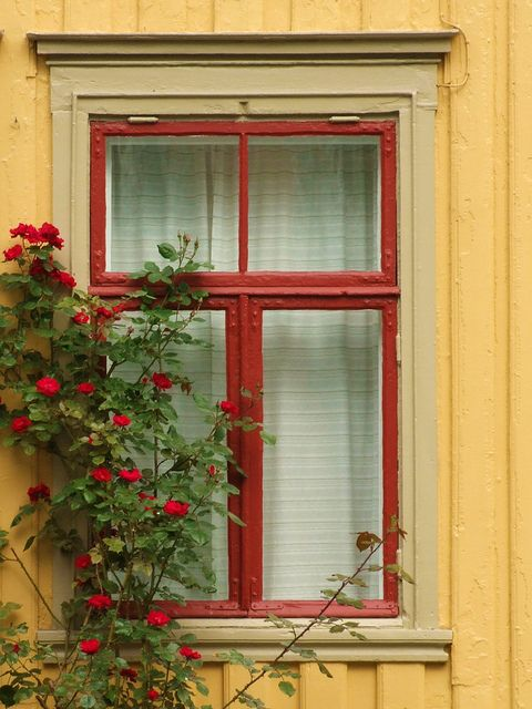 Norway - a window in Trondheim: Norway Norwegian, Doors Window, Scandinavian Interiors, Beautiful Window, Beautiful Norway, Trondheim, Rustic Window, Noruega, Buildings Window