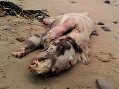 Mystery 'beast' washes up on Wales coast. Picture Facebook/Peter Bailey