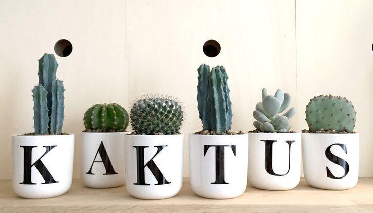 <p>Kaktus og sukkulenter skal have masser af lys og lige tilpas meget vand. Her er en lille pasningsguide.</p>