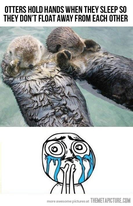 Otters hold hands!: Heart, Sweet, So Cute, Pet, Happy, Baby Animal, Sea Otters, Cutest Animal, Holding Hands
