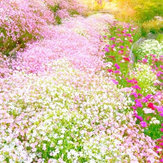 Carpet of Pretty Pastel Flowers