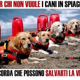 Chiesa di San Lorenzo: I cani vanno accettati anche in spiaggia!