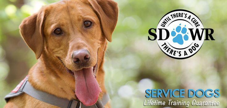 Seizure Response Dogs Seizure Response Dogs Seizure Alert Dogs