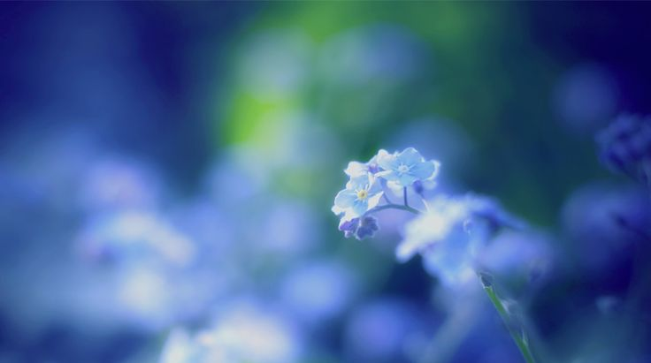 free download pictures of flower
